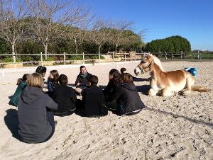Intervenciones con caballos en el ámbito educativo